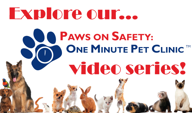 Paws-on-Safety