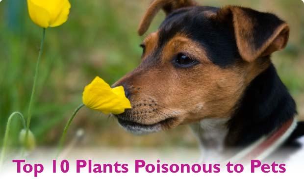 Top-10-Plants